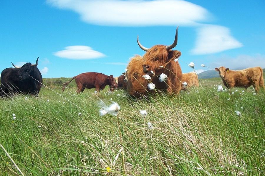 Den Schottlandurlaub im Auto zu verbringen, ist keine schlechte idea, da viele Gegenden abgelegen sind.