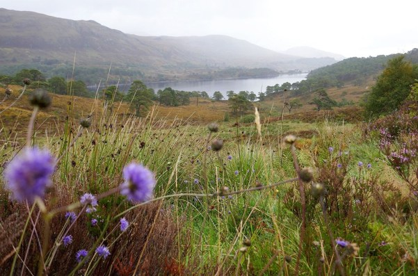 Atemberaubende Natur kann auf einer Wandertour auf dem Glen Affric Kintail Way in Schottland genossen werden.