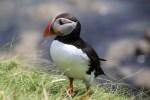 Individuelle Wanderreisen in Schottland bieten Dutzende Moeglichkeiten, die hiesige Flora und Fauna zu entdecken.