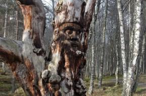 Hier finden Sie eine Auswahl der besten Wanderungen mit Kindern im Cairngorm Nationalpark.