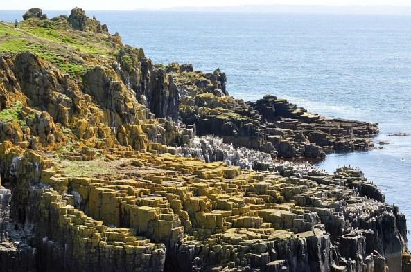Beuschen Sie auf ihrer Reise durch Schottland auch die Isle of May.