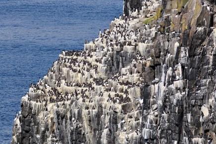 Vor allem im Fruehjahr und Sommer bietet sich ein Tagesausflug auf die Isle of May an.