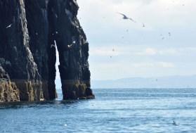 Unternehmen Sie einen Tagestrip auf die wunderschoene Isle of May.