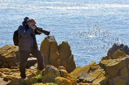Viele Ornithologen kommen auf die Isle of May zur Vogelbeobachtung.