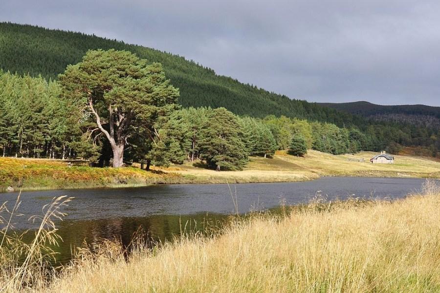 Viel Natur steht im Zentrum dieser Rundreise durch Schottland.