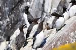 Die Wildlife Reise durch Schottland eignet sich zur Vogelbeobachtung.