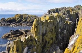 Die Islay of May ist einer der Hotspots in Schottland um Puffins zu beobachten.