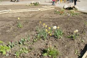 Die ersten Blumen zeigen sich im Schulgarten.
