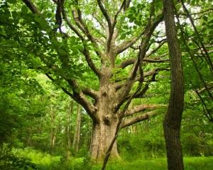wood in Kansas City