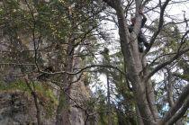 Stromový prieskum