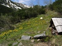Studnička v Tomanovej doline