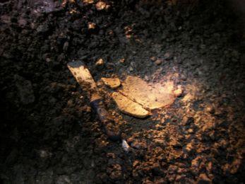 Črepy z nádoby Púchovskej kultúry. Foto: František Hanes