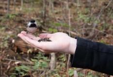 Chickadee in hand.