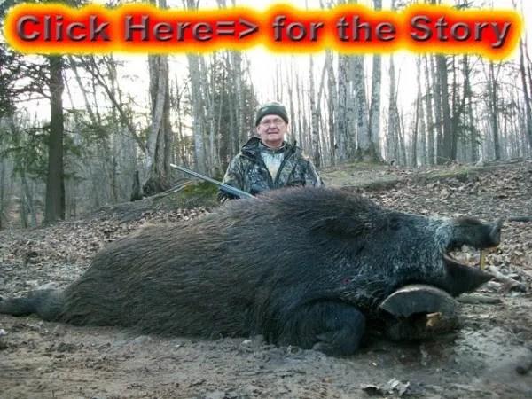 Boar Hunt