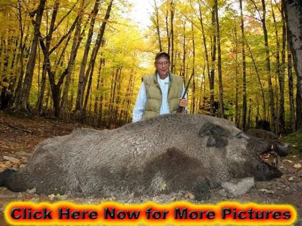 Raging Boar