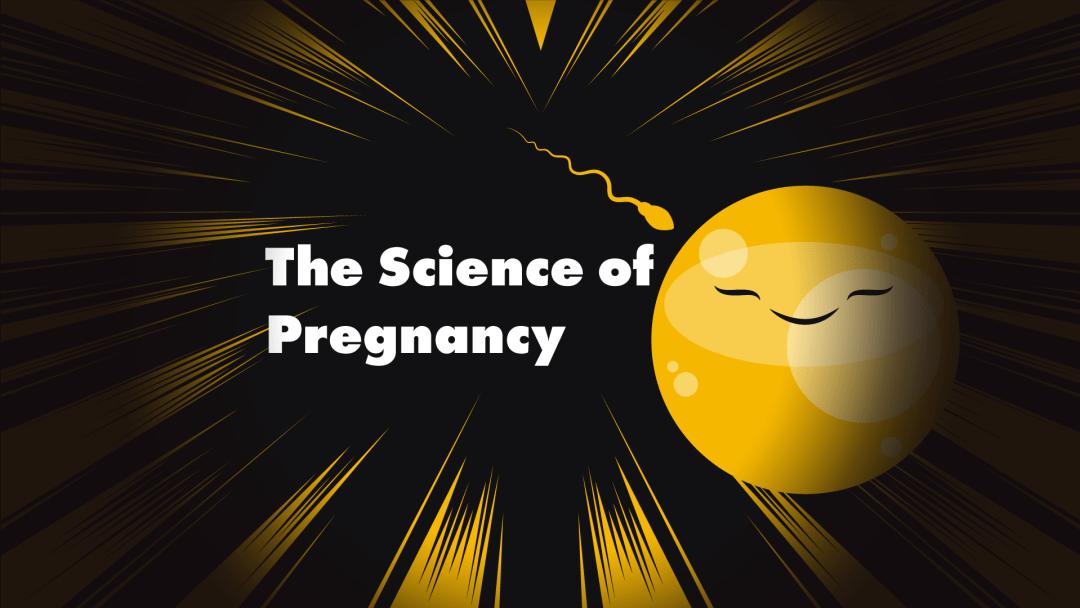PREGNANCY HEADER