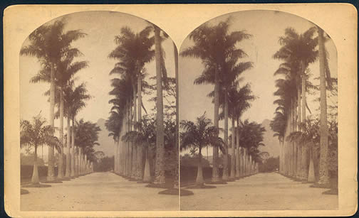 Avenue of Royal Palms - William Bell