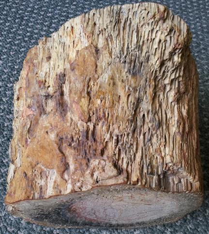 Permian Tree Fern