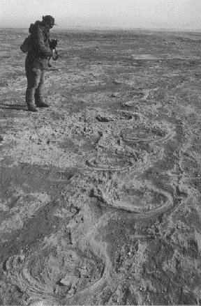 mammoth tracks