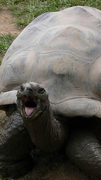 Harriet – Galapagos tortoise