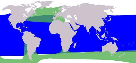 pilot whales range