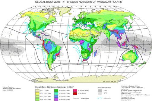 Latitudinal distribution of plant species