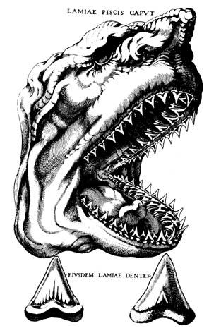 Steno's shark sketch