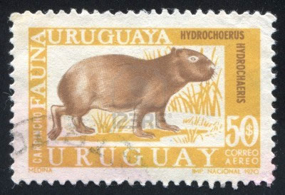 1970 stamp of capybara