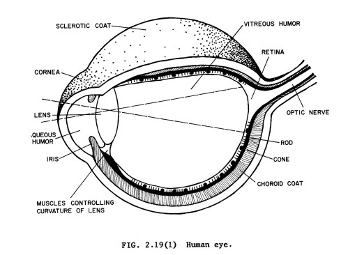 small resolution of diagram for rod eye