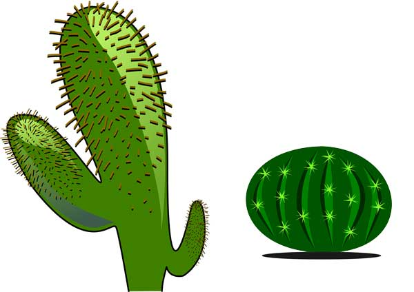 Cactus Plant: (Habitation. Growth. and Facts) - Science4Fun