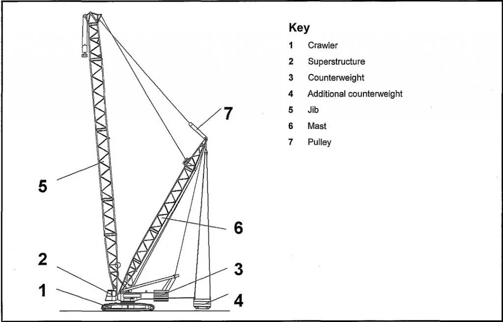 Why Should Cranes Be Handled With Care? » Science ABC
