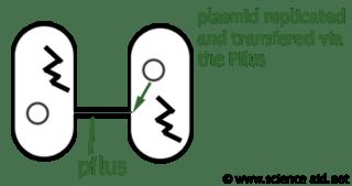 Antibiotics: Function, Bacterial Interaction & Antibiotic
