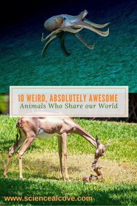 10 Weird, Absolutely Awesome Animals Who Share our World - http://sciencealcove.com/2014/07/weird-animals-share-earth/