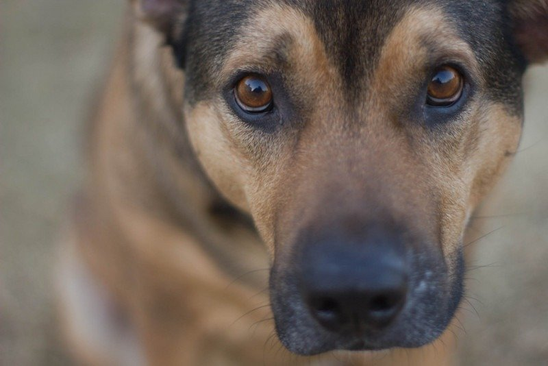 Dog close-up by Elizabeth Tersigni