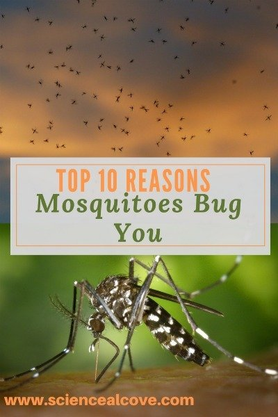 Top 10 Reasons Mosquitoes Bug You