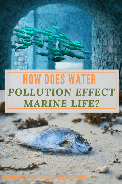 How Does Water Pollution Effect Marine Life?