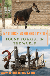 5 Astonishing Former Cryptids Found to Exist in The World -https://sciencealcove.com/2015/03/five-former-cryptids-found-to-exist/
