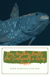 Does Anything Really Die- Coelacanth a Living Fossil-https://sciencealcove.com/2015/03/living-fossil-coelacanth/