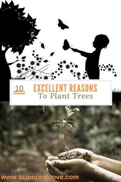 10 Excellent Reasons To Plant Trees