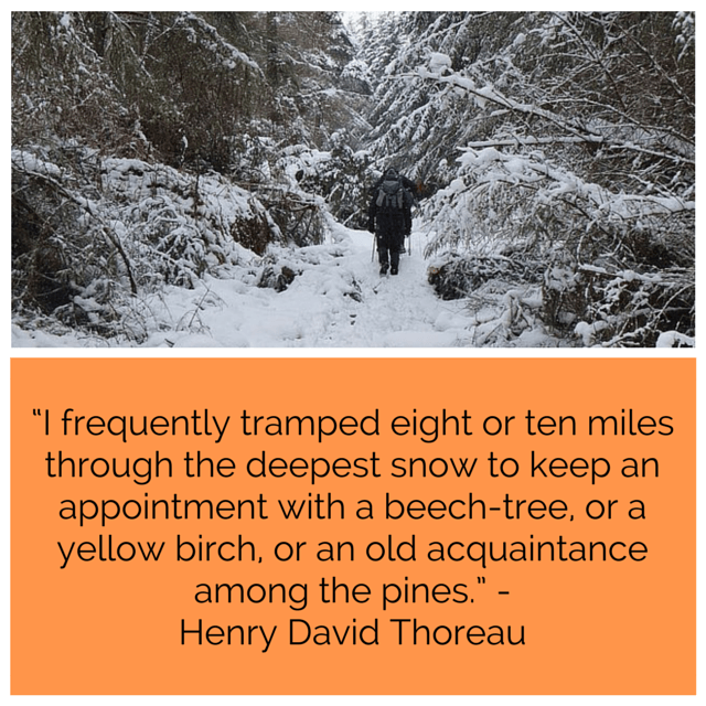 Henry David Thoreau and Trees