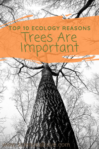 Trees are important, ecologically, for a number of reasons. From making oxygen to cleaning our air and soil, discover 10 reasons trees are so important. #arboretums #trees #importanceoftrees #treeecology #treescience