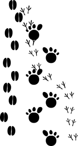 http://pixabay.com/en/footsteps-tracks-footprint-animal-23176/