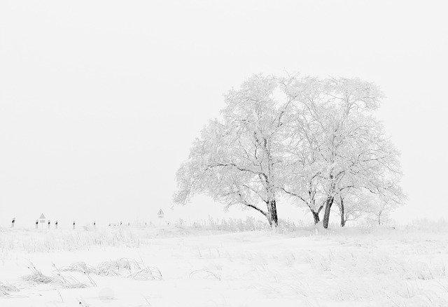 IIan Shamir:  Tree Advice