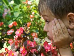 http://www.public-domain-image.com/free-images/people/children-kids/happy-boy-face-close-up