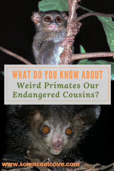 What Do You Know About Weird Primates Our Endangered Cousins?