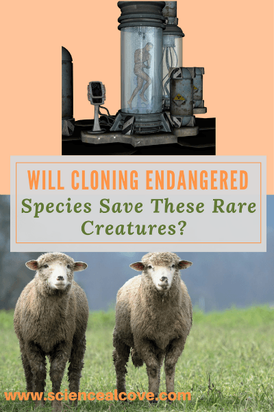 Cloning endangered species may one day provide a piece of the puzzle in the conservation of endangered species. #animals #cloning #clone #science #pictures
