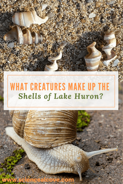 What Creatures Make Up the Shells of Lake Huron?