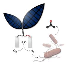 Bionic leaf and fuel