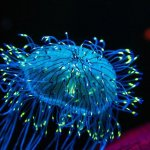 What Do You Need to Know about Amazing Bioluminescence?