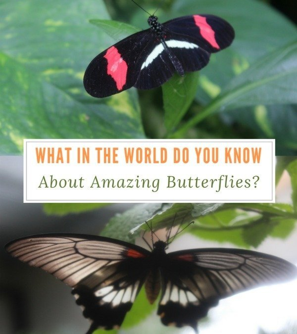 What in the World Do You Know About Amazing Butterflies?
